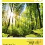 Forests Lesson Plan